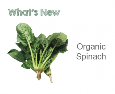 Meet Our Organic Spinach!